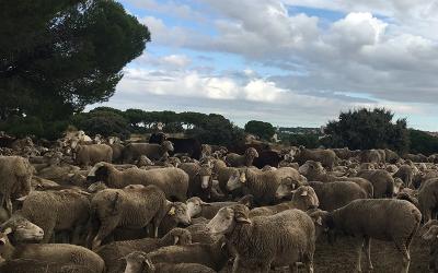 El Grupo Operativo AgroecologiCAM invita a los Medios de comunicación a conocer  la Agroecología